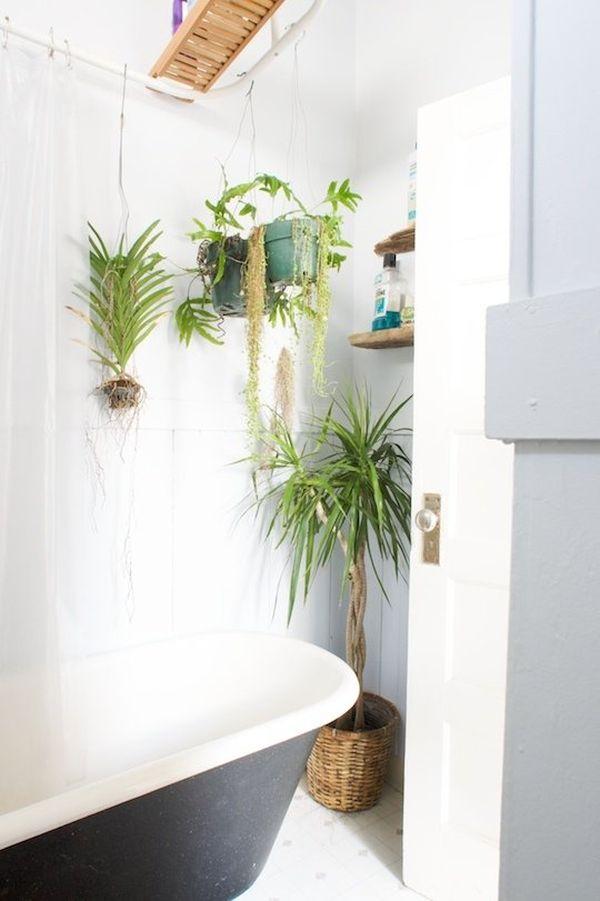 Plantes et fleurs dans la salle de bains for Plante dans salle de bain